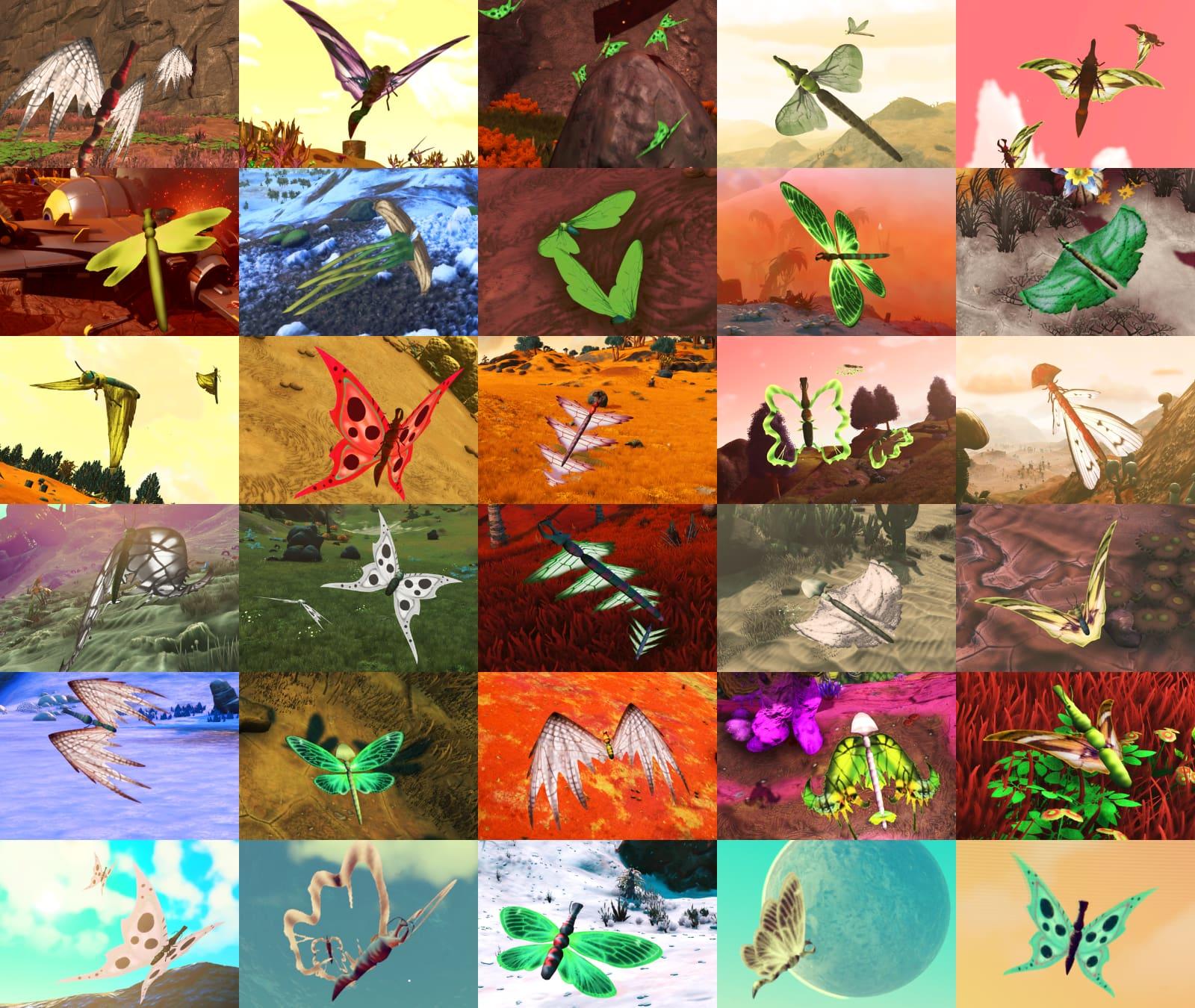 Butterflies: 30 different ones