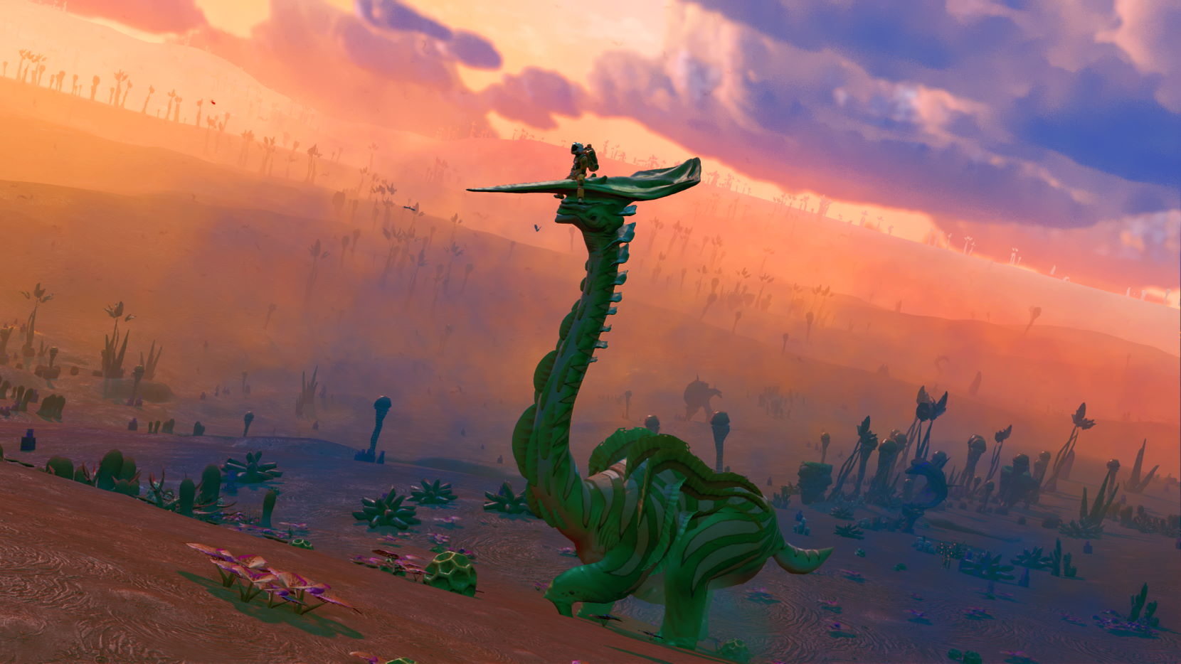 Rising a majestic diplo at sunset